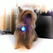 Colgantes luminosos, medallones led,  para mascotas