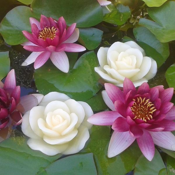 flor vela on line: