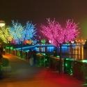 Árboles luminosos