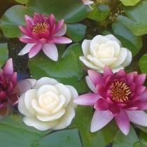 Vela de cera  flor flotante con luz Led